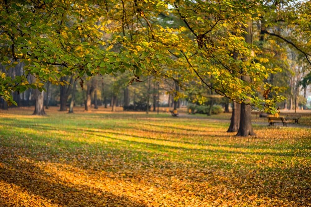 Chopin Park Gliwice