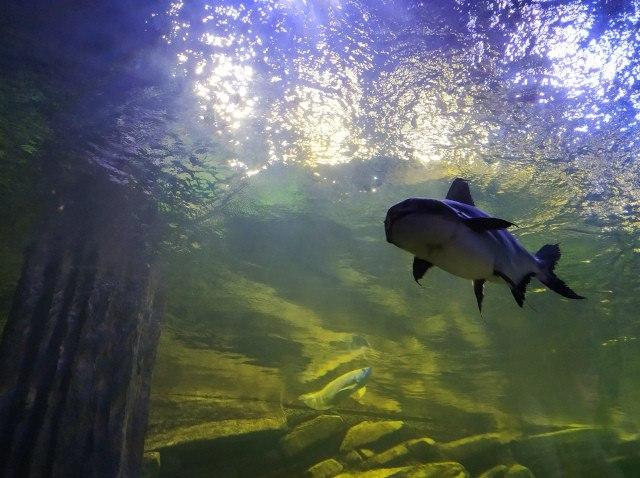 Oceanarium Miedzyzdroje
