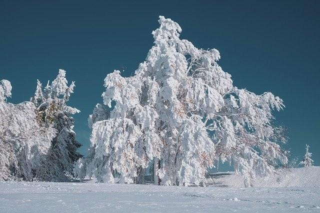 Polish Cold Pole